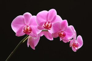the-pink-orchid-juergen-roth
